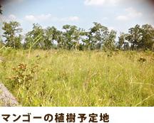 マンゴーの植樹予定地