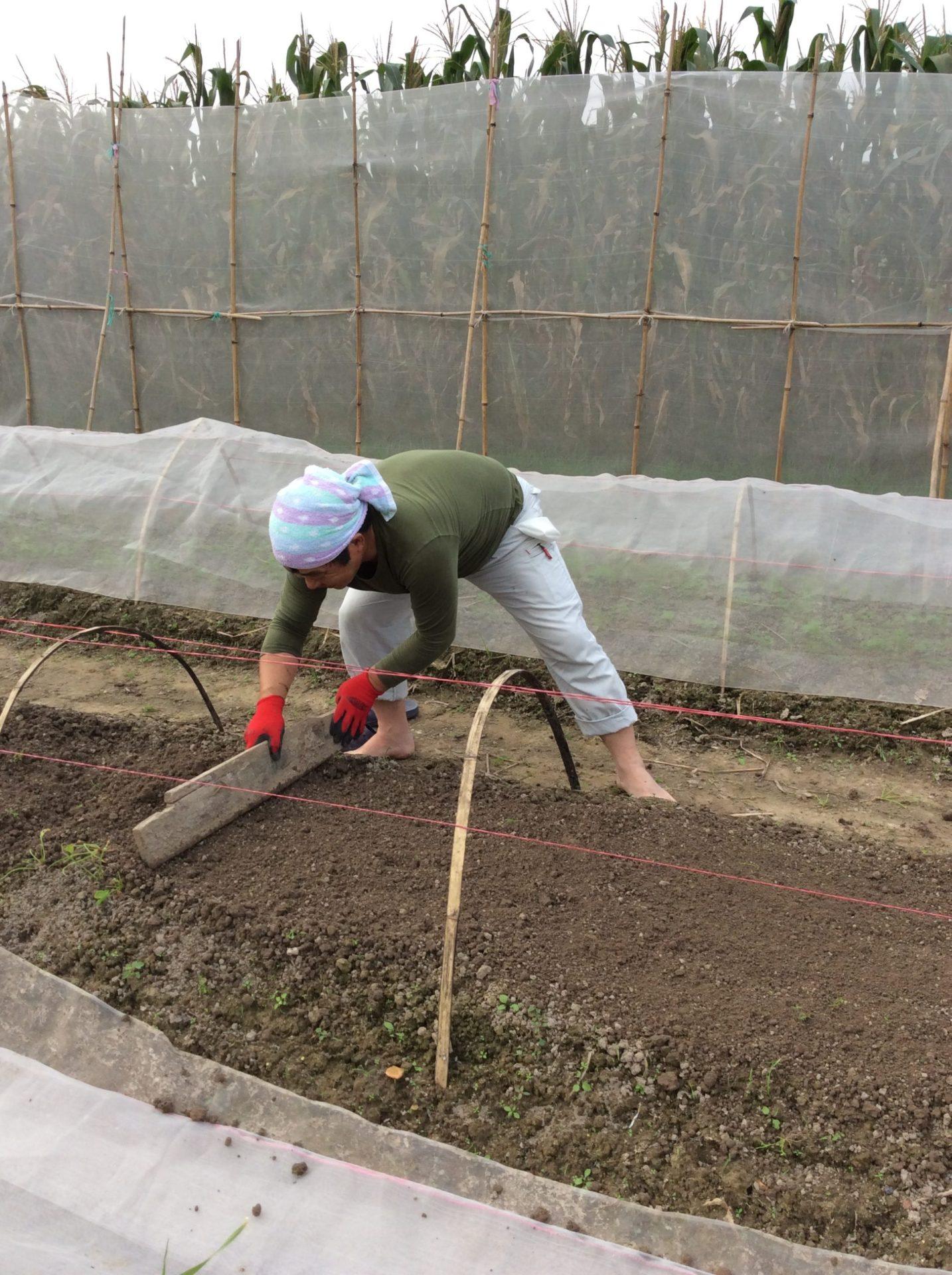畑で野菜の栽培を試験的にスタートしています