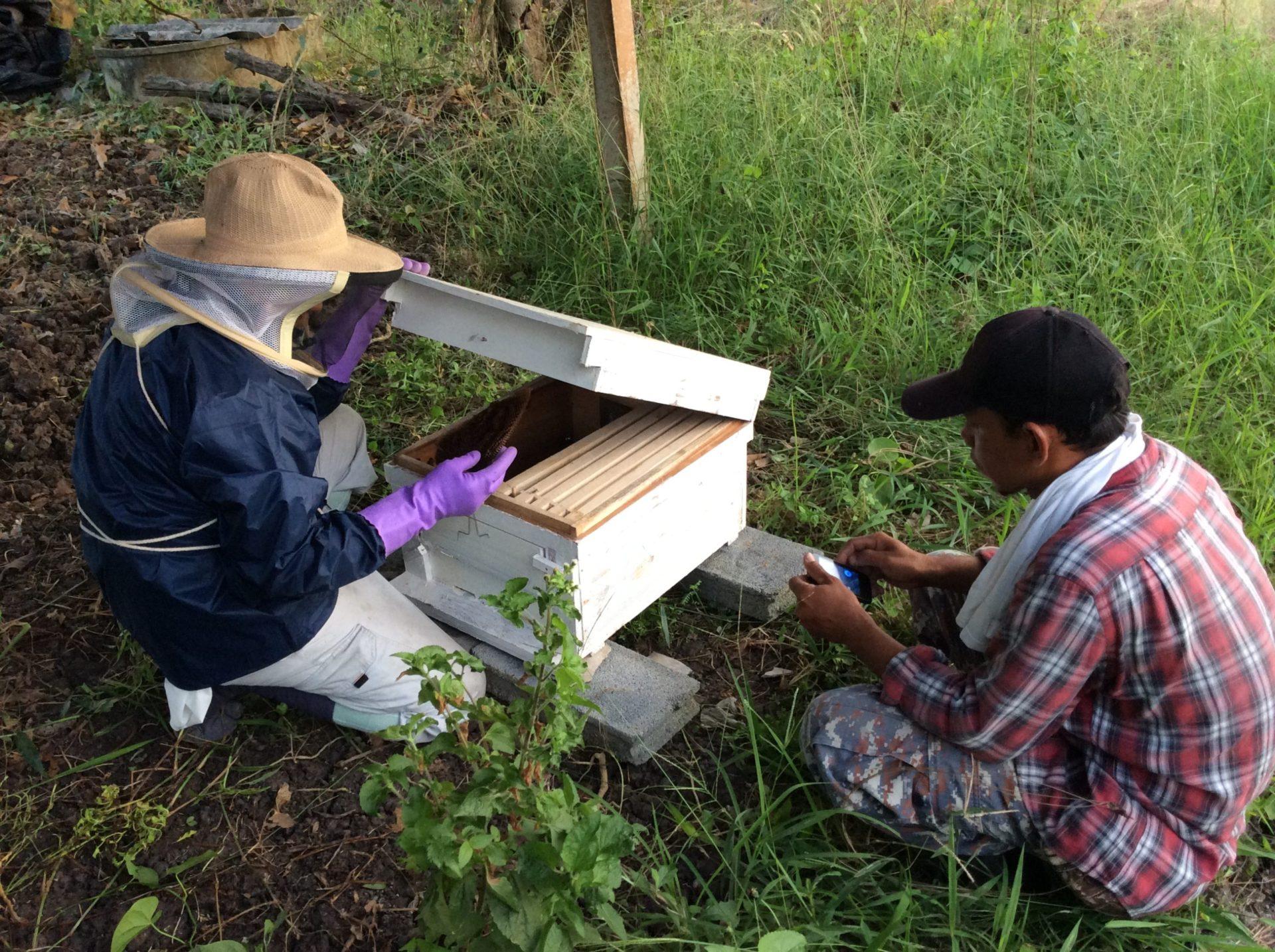 蜂を巣箱に入れてみました