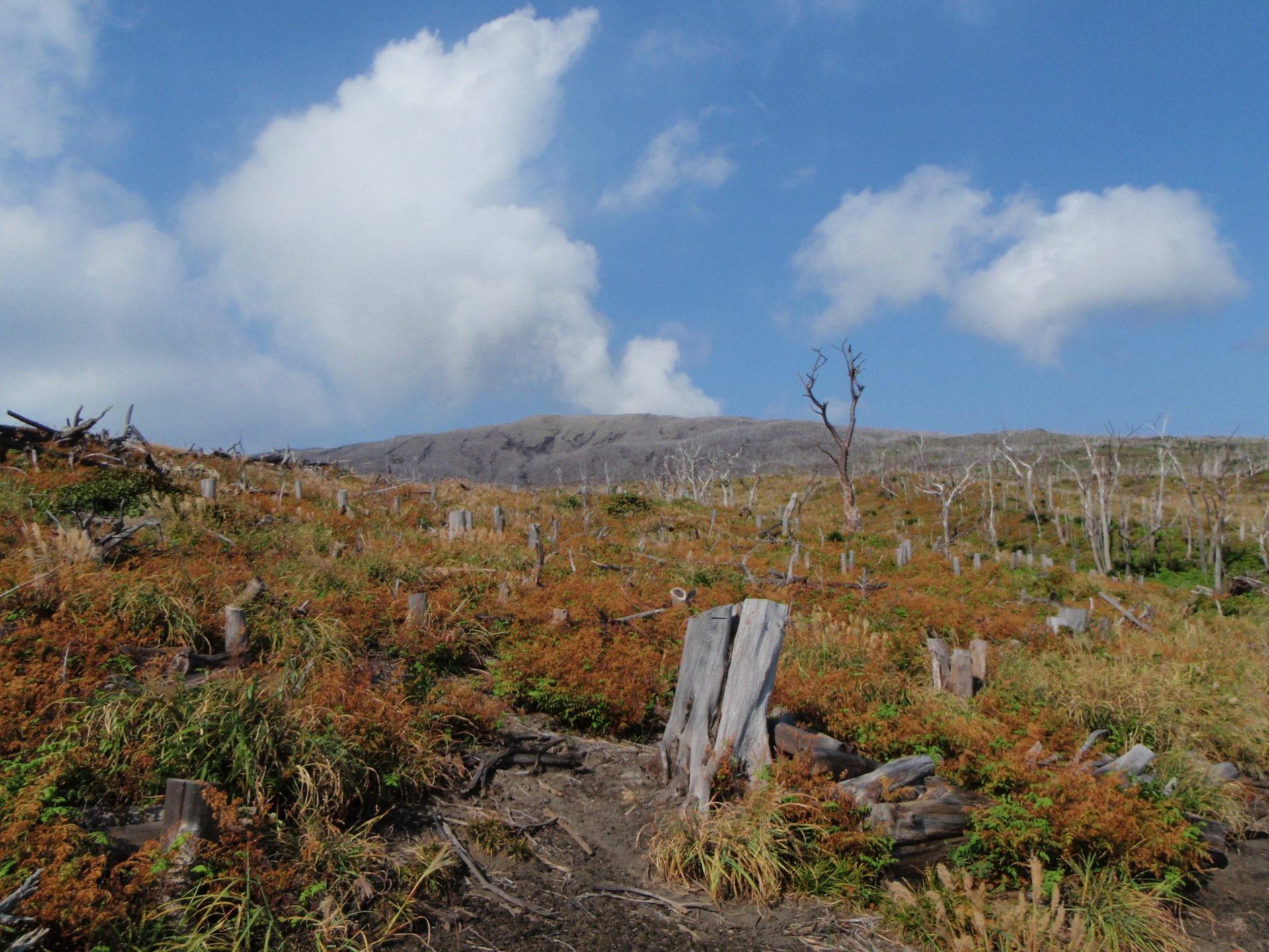 大噴火の跡地に植樹をしました