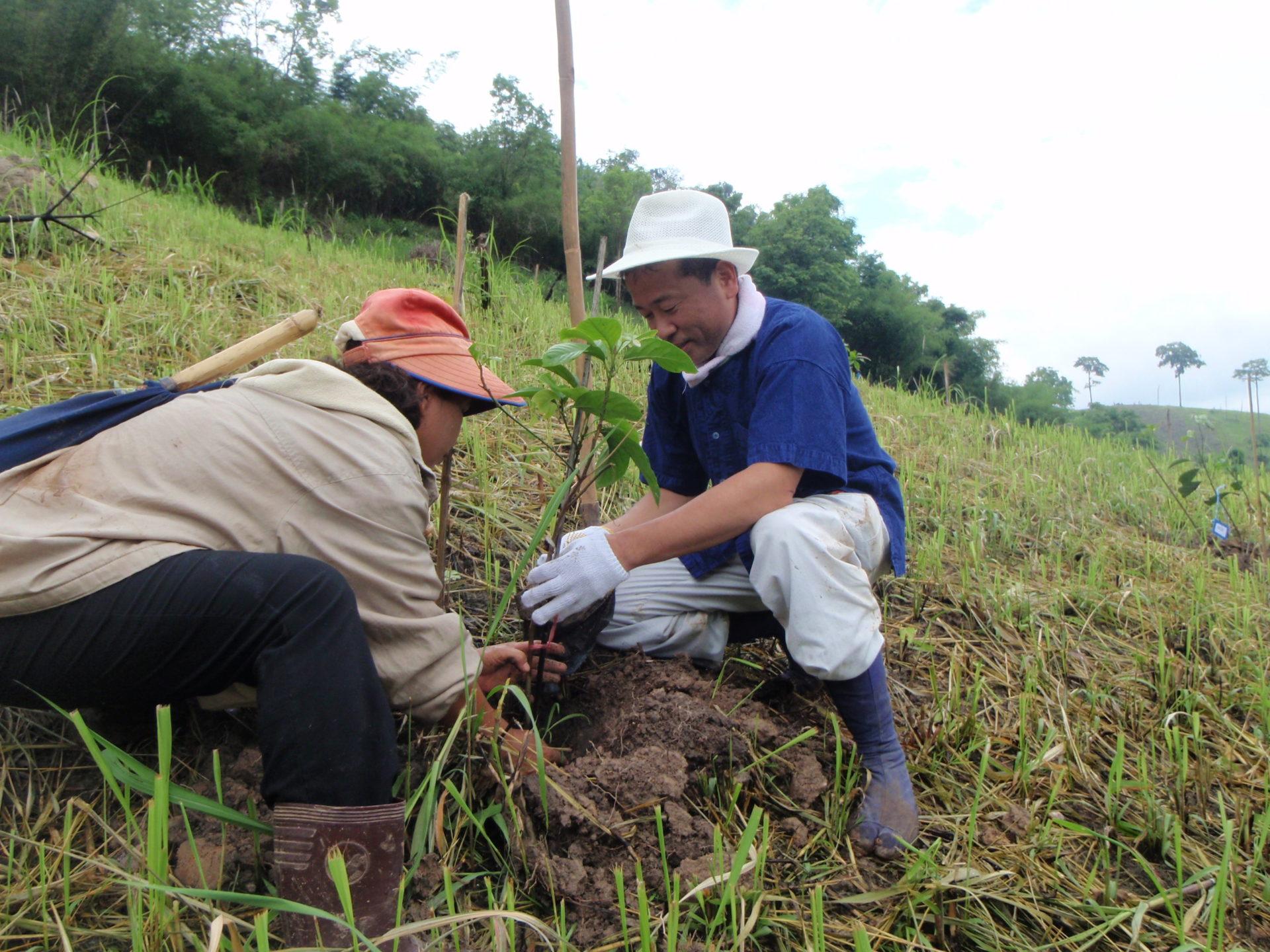 土砂崩れを防ぐための植樹