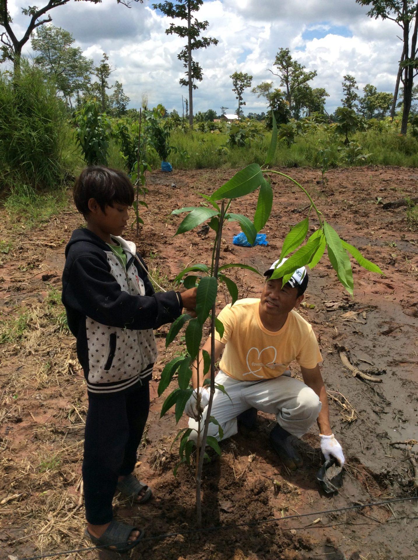 マンゴーの果樹を300本植樹