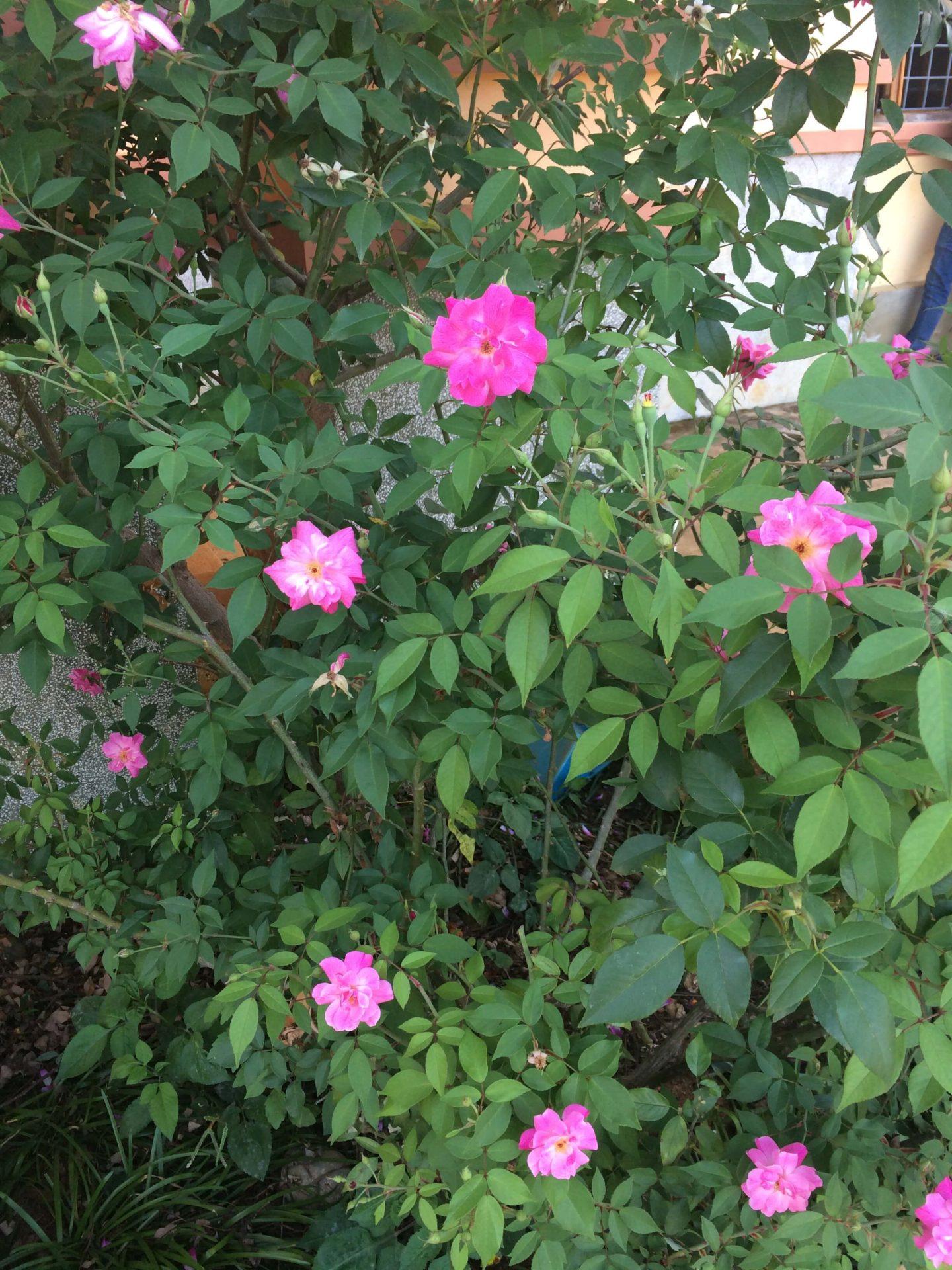 小さな花がたくさんありました