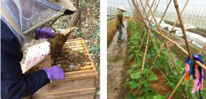 ベトナム北部、バクジャンで養蜂を開始 ベトナム北部、タイビンで有機野菜の栽培を開始
