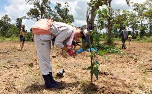 カンボジアで植樹活動を開始